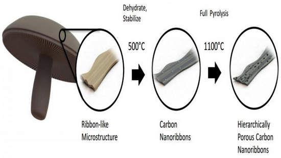 The skin from the caps of portobello mushrooms, once processed, provides a material for battery anodes (diagram: UC Riverside)
