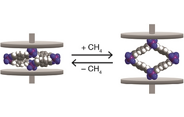 Space-filling models of cobalt-bdp MOF in the collapsed state (left) and CH4-expanded state (right). The purple, grey, blue, and white spheres represent Co, C, N, and H atoms, respectively (image courtesy of the researchers)