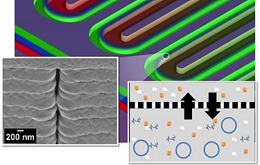 A section of a serpentine channel reactor shows the parallel reactor and feeder channels separated by a nanoporous membrane. Left: a single nanopore viewed from the side; right: a diagram of metabolite exchange across the membrane (image: ORNL)