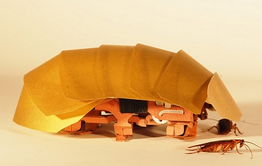 The CRAM robot, inspired by cockroaches, can crawl even when squashed to half its size (photo: Tom Libby, Kaushik Jayaram and Pauline Jennings, courtesy of PolyPEDAL Lab UC Berkeley)