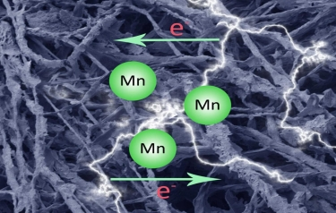 This is an artistic rendering of a carbonised fungal biomass-manganese oxide mineral composite (MycMnOx/C) can be applied as a novel electrochemical material in energy storage devices (Credit: Qianwei Li and Geoffrey Michael Gadd)