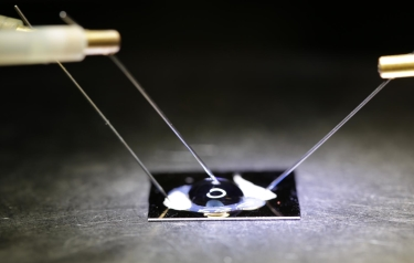 The biosensor chip -- consisting of a double stranded DNA probe embedded onto a graphene transistor -- electronically detects DNA SNPs. (Credit: Jacobs School of Engineering, UC San Diego)