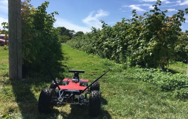Agri-rover robot enjoying raspberry picking in the sunshine (Credit: STFC RAL Space)