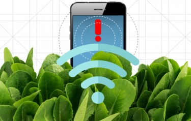 By embedding spinach leaves with carbon nanotubes, MIT engineers have transformed spinach plants into sensors that can detect explosives (Credit: Christine Daniloff/MIT)