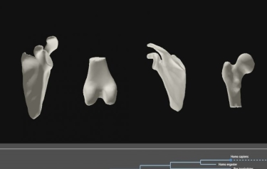 Interactive 3D models of human joints (Credit: Oxford University)