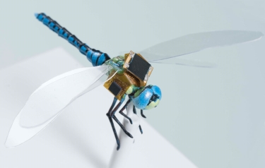 A first generation backpack guidance system that includes energy harvesting, navigation & optical stimulation on a to-scale model of a dragonfly (Credit: Draper)