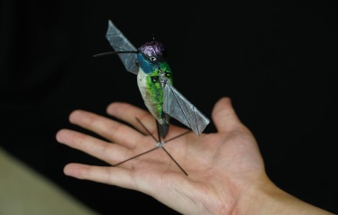 Purdue University researchers are building robotic hummingbirds that learn from computer simulations how to fly like a real hummingbird does. (Credit: Purdue University photo/Jared Pike)