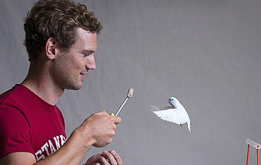 Eirik Ravnan, a mechanical engineering graduate student, trains small birds called parrotlets to fly from perch to perch, or to fly through narrow passageways. In exchange for their flight displays, the birds receive their favourite seeds as a reward